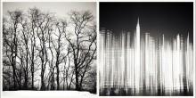 Veins/New York